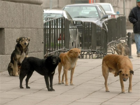 bulgarian-stray-dogs.jpg