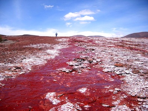 red-chile-top.jpg
